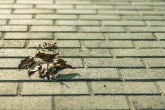 在沥青的一片干燥叶子 免版税库存图片