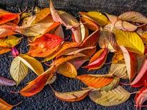 在沥青的五颜六色的秋叶 免版税库存照片