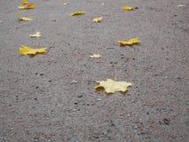 在沥青的秋叶 抽象背景 免版税库存图片