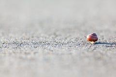 在沥青的蜗牛 库存图片