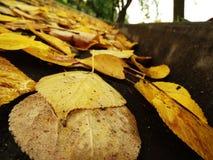 在沥青的路标与下落的秋叶 库存照片