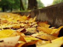 在沥青的路标与下落的秋叶 图库摄影