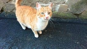 在沥青路面的无家可归的红色猫 免版税库存照片