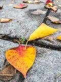 在沥青边路的叶子 库存照片