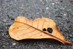在沥青,细节的干燥叶子 库存照片