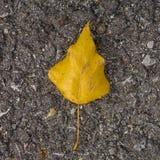 在沥青3的树叶子 免版税库存图片