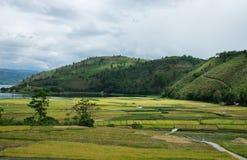 在河三角洲的米领域,苏门答腊 库存照片