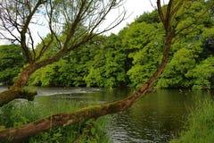 在河上的分支 免版税库存图片