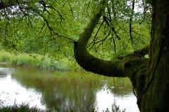 在河上的树 库存照片