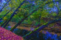 在河下的树 免版税图库摄影