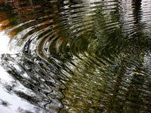 在河反映的树 库存图片