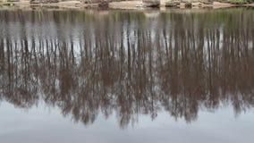 在河反映的被倒置的春天森林 影视素材