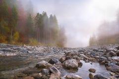 在河和森林的秋天薄雾 免版税库存照片