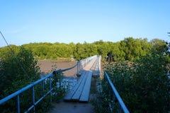 在河和美洲红树森林的木脚桥梁 图库摄影