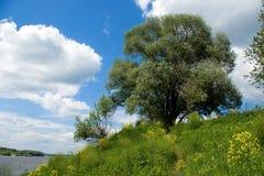 在河天空结构树的蓝绿色oka 免版税库存图片