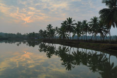 在河婆罗双树的椰子树反射在Talaulim 免版税库存图片