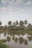 在河婆罗双树的椰子树反射在Talaulim 图库摄影