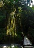 在河小河的五颜六色的春天叶子 库存照片