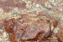 在河岩石的许多小鱼 图库摄影