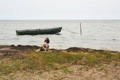 在河岸的一条狗在一条老小船等待所有者游泳  免版税库存照片
