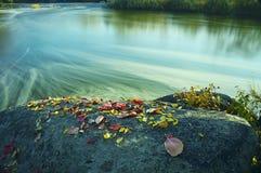 在河岸的大岩石有秋天五颜六色的下落的叶子的 免版税库存图片