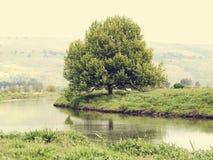 在河岸的大老树 免版税库存照片