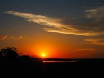 在河岸的日落场面有鸟的 免版税库存图片