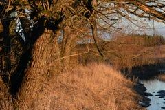 在河岸的树在日落之前 免版税库存照片