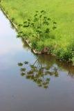 在河岸的树 图库摄影