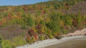 在河岸的森林小山 股票录像