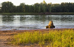 在河岸的石头 免版税库存图片
