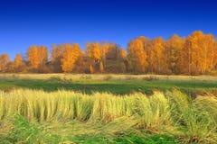 在河岸的秋天 免版税库存照片