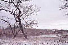 在河岸的第一雪 秋天早晨风景 图库摄影