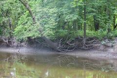 在河岸的粗糙的树根 免版税库存照片