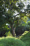 在河岸的结构树 库存照片