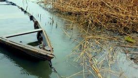 在河岸的老被击毁的小船春天的 股票视频