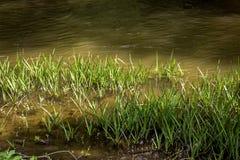 在河岸的草 图库摄影