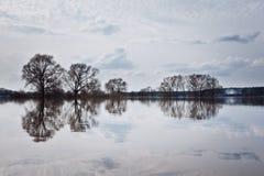 在河岸的结构树 免版税库存图片