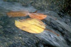 在河急流的叶子 图库摄影