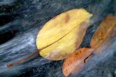 在河急流的叶子 库存照片