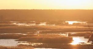 在河或湖风景的风摇摆的高干草 东欧的本质 股票视频