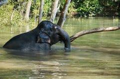 在河放松的大象 免版税图库摄影