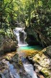 在河斯洛文尼亚瀑布附近的bovec森林 免版税图库摄影