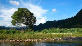 在河旁边的树 库存图片