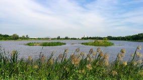 从在河旁边的看法在大风天 免版税图库摄影