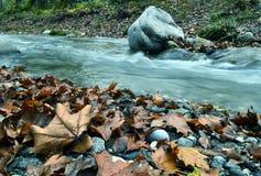 在河旁边的秋叶 免版税库存照片