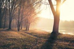 在河日出的秋天 库存图片