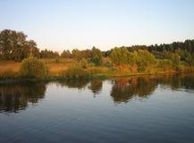 在河日落时间的,水平的看法附近的美丽的森林 库存图片