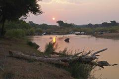 在河日落的olifants 免版税库存图片