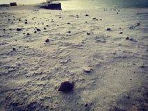 在河沙子驱散的蜗牛 免版税库存照片